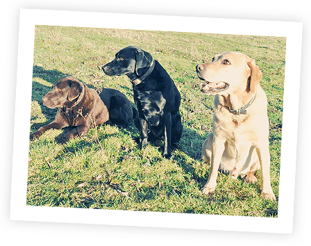 Best Dog Insurance >> Dog Insurance 1300 Insurance